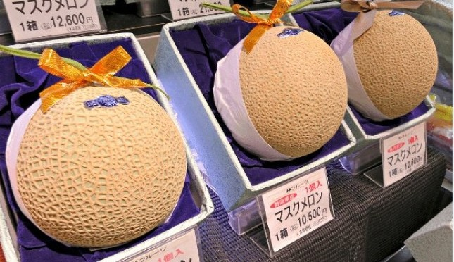 Khasiat Buah Melon Untuk Tubuh