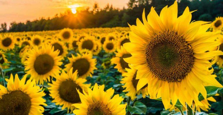 Matahari = Masa Lalu?